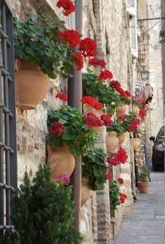 Houseplants That Filter the Air We Breathe Wall Of Geramiums Outdoor Plants, Outdoor Gardens, Red Flowers, Beautiful Flowers, Red Geraniums, Summer Plants, Italian Garden, Lavender Roses, Colorful Garden