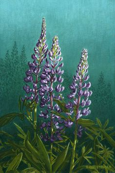 Lupins PEI - Acrylic Painting by Susan Christensen Oil Pastel Art, Mural Wall Art, Summer Flowers, Botanical Prints, Canvas Art, Canvas Paintings, Painting Techniques, Rock Art, Painted Rocks