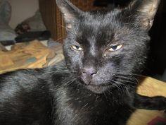 Il mio gatto Lucifero <3