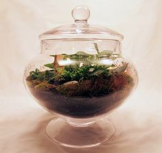 Great tutorial and I love the terrarium with the succulents…might ... - (500x473 - 112kB)  http://www.thenester.com/2010/03/terrarium-101-a-guest-post.html