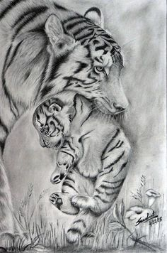 Original Animal Drawing by Sushant Sinha Tiger Sketch, Tiger Drawing, 3d Art Drawing, Tiger Art, Cool Art Drawings, Baby Animal Drawings, Animal Sketches, Lioness Tattoo Design, Colorful Animal Paintings