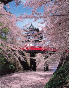 Hirosaki Castle with cherry trees, Aomori, Japan 弘前城。桜の名所。桜の中に城がある。