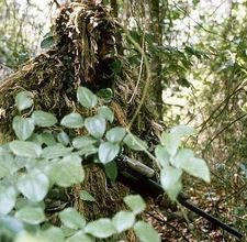 How to Make a Ghillie Suit. A ghillie suit, originally designed for hunting and now also used for military operations, (for assassinations or scouting) is arguably the best type of wearable camouflage; Military Quotes, Military Humor, Military Life, Army Life, Military Uniforms, Usmc, Marines, Gun Humor, Ghillie Suit