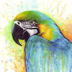 Watercolor Painting Art Print featuring the painting Macaw Watercolor by Olga Shvartsur