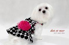 Mochi & Jolie - Designer Canine Lifestyle Products