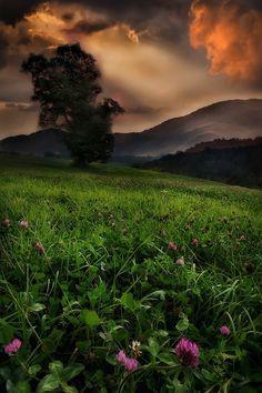 Clover field ~ Todd Wall