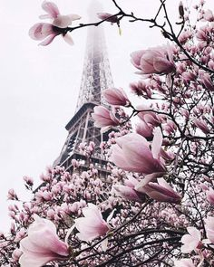 Blooming explosion 🌸 We can promote your photos in our account. Check the link in our bio for instructions: Eiffel Tower, Paris, France. Photo by 💖 Good Deeds Good. Frühling Wallpaper, Paris Wallpaper, Nature Wallpaper, Trendy Wallpaper, Beautiful Paris, Beautiful Flowers, Paris Photography, Nature Photography, Real Nature