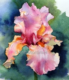 Watercolor Iris - Ann Mortimer Art // Gallery