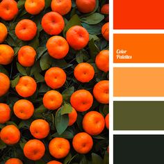tangerine color | Color Palette Ideas