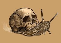 Skull Snail by Timo Grubing