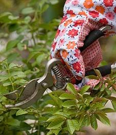 When to trim your trees and shrubs
