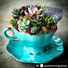 diy garden projects 40 Easy DIY Teacup Mini Garden Ideas to Add Bliss to Your Home Succulent Gardening, Container Gardening, Garden Plants, Indoor Plants, House Plants, Organic Gardening, Gardening Tips, Indoor Outdoor, Potted Plants