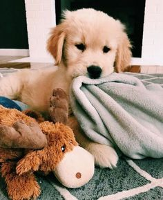 Facts On The Friendly Golden Retriever Pup Super Cute Puppies, Cute Baby Dogs, Cute Little Puppies, Cute Dogs And Puppies, Cute Little Animals, Cute Funny Animals, Cute Babies, Doggies, Funny Pets