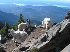 Summit of Mt. Ellinor, Olympic Range. Hook of the hood canal in the distance.