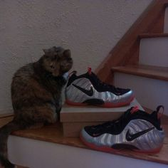 Bella loves sneakers too!