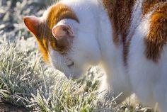 Herbert inspects the frosty grass