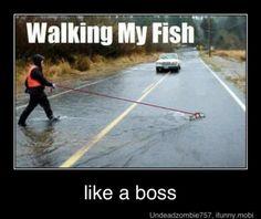 ... like a boss