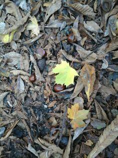 Vienna, Firewood, Texture, Plants, Surface Finish, Flora, Plant, Wood Fuel, Planting