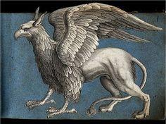 grifone mitologico disegni - Cerca con Google