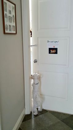 Wow. Love door buddy! I finally have a dog free room for my cat.