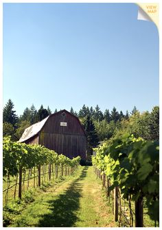 The Fraser Valley is less than 100 kilometres from downtown Vancouver and is the ideal destination for a day trip. Explore this true agricultural wonderland! Fraser Valley, Downtown Vancouver, Close To Home, Banff, Wineries, Day Trip, British Columbia, Vacation Ideas, Jasper