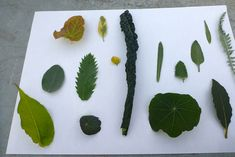 When you do a botanical illustration of a leaf, you need to ensure form, greens, and feel of the leaf is right. My recent workshop focused on these topics. Drawing Sketches, Drawings, Painting Workshop, Painted Leaves, Painting Lessons, Botanical Illustration, Roots, Plant Leaves, Nature