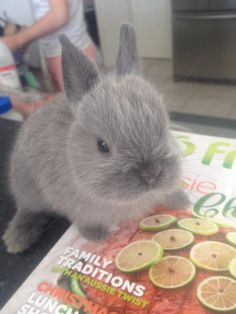 This rabbit is having NONE of your shit