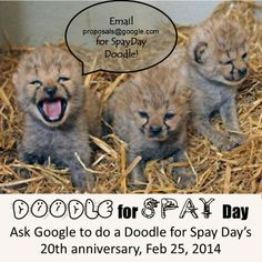 Show support for #spay/neuter!  like our FB page https://www.facebook.com/SpayDayDoodle