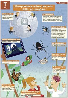 """10 expressions autour des mots """"toile"""" et """"araignée"""""""