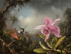 Orchid with Two Hummingbirds ARTIST / MAKER: Martin Johnson Heade, 1819 - 1904 COLLECTION: American Art DATE: 1871 CLASSIFICATION: Paintings MEDIUM: oil on prepared panel DIMENSIONS: Frame: 22 3/8 x 26 1/2 in. (56.8 x 67.3 cm) Canvas: 14 7/8 x 19 in. (37.8 x 48.3 cm) CREDIT LINE: Museum Purchase CREDIT LINE REPRODUCTION: Reynolda House Museum of American Art OBJECT NUMBER: 1976.2.8