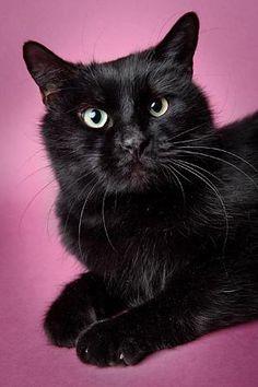 Pet adoption adoption and pets on pinterest