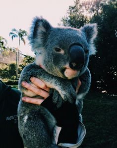 Like what you see? Follow me for more: @India16 Koalas, Wild Animals, Baby Animals, Animals And Pets, Funny Animals, Cute Animals, Calligraphy Doodles, Cute Creatures, Beautiful Creatures