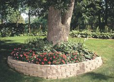 008 Corner With Tree Retaining Wall Around Trees Pinterest Garden Yard And Backyard
