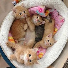 Pile of cute kittens. Which one would you pick? and like OMG! get some yourself some pawtastic adorable cat apparel!