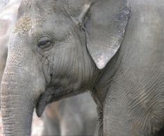 Urge Circus World to Ban Elephant Acts for Good!  BOYCOTT THEM! THEIR ACCOUNTANTS WILL GET THE HINT!
