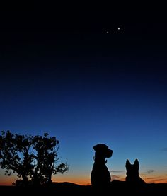 """I was out last night walking the dogs,"" explains photographer Robert Hanelt of Santa Fe, New Mexico. ""We just had to stop to admire the planets."""