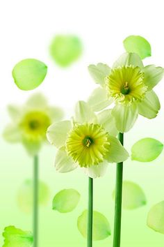 green,yellow, and white...