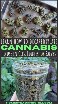 Interested in making cannabis edibles, oils, or salve? Come learn about decarboxylation, and how to easily decarboxylate your cannabis in the oven. Weed Recipes, Marijuana Recipes, Cannabis Edibles, Cannabis Plant, Cannabis Oil, Thc Oil, Healing Herbs, Medicinal Herbs, Marijuana Facts