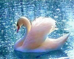 Beautiful swan Nature Other Swan Love, Beautiful Swan, Beautiful Birds, Animals Beautiful, Vogel Gif, Animals And Pets, Cute Animals, Wild Animals, Swan Pictures