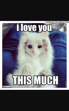 21 Best Love Quotes Images Animal Pictures Cutest Animals Drawings