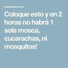 Coloque esto y en 2 horas no habrá 1 sola mosca, cucarachas, ni mosquitos!