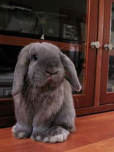 cute and cuddly Cute Bunny Pictures, Baby Animals Pictures, Animals And Pets, Funny Animals, Cute Baby Bunnies, Baby Animals Super Cute, Cute Little Animals, Lop Bunnies, Pet Bunny Rabbits