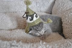 grab gifts for your kitties over at www.luvurcats.com