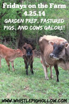 Fridays on the Farm: Garden Prep, Pastured Pigs, and Cows Galore! | Whistle Pig Hollow