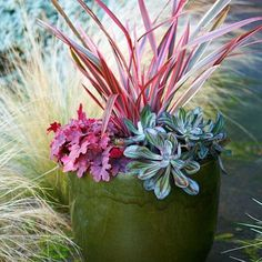 Create an instant mini-garden Start with the plants, then pick a container that will extend the color theme. Here, a 16-inch-wide olive green pot makes the brighter foliage pop. Read more: 9 best plants for colorful containers  Photo: Jennifer Martiné, Sunset.com