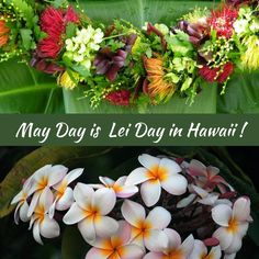 May Day is Lei Day in Hawaii. This statewide holiday is celebrated on May every year since Learn the history of this beloved tradition and events. Hawaiian Art, Hawaiian Theme, May Days, Hawaii Life, Deciduous Trees, Leis, Hawaiian Islands, Lanai, Big Island
