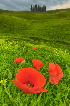 Spring in Val d'Orcia, province of Siena Tuscany, Italy
