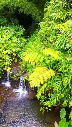 Beautiful Landscape Wallpaper, Beautiful Landscapes, Beautiful Gardens, Big Island Hawaii, Beautiful Nature Pictures, Nature Images, Amazing Nature, Hawaii Travel, Hawaii Vacation