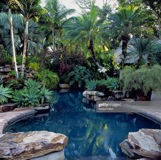 View top-quality stock photos of Swimming Pool Surrounded By Tropical Plants Miami Florida Usa Landscape Architect Raymond Jungles. Find premium, high-resolution stock photography at Getty Images. Plants Around Pool, Landscaping Around Pool, Tropical Pool Landscaping, Pool Plants, Tropical Backyard, Swimming Pools Backyard, Tropical Plants, Backyard Landscaping, Tropical Gardens