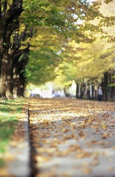 My Autumnal Point Of View by Fabrizio Sciami Cool Background Pics, Blur Image Background, Studio Background Images, Background Images For Editing, Black Background Images, Picsart Background, Background Designs, Digital Backgrounds, Photo Backgrounds